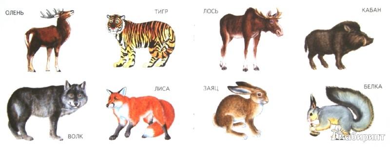 Иллюстрация 1 из 23 для Дикие животные | Лабиринт - книги. Источник: Лабиринт