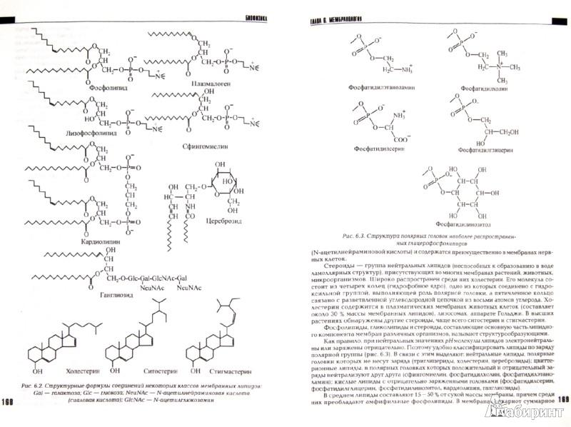 Иллюстрация 1 из 6 для Биофизика - Артюхов, Ковалева, Наквасина | Лабиринт - книги. Источник: Лабиринт