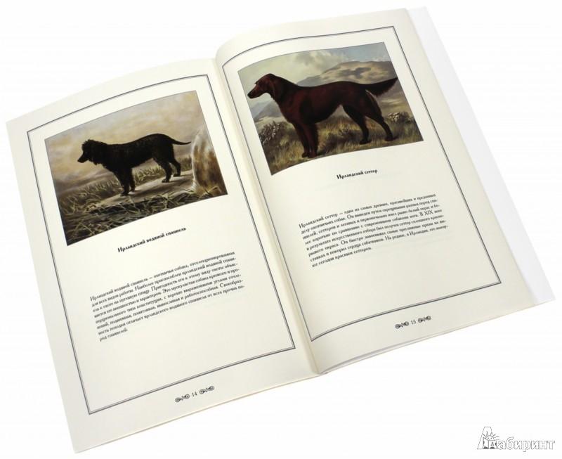 Иллюстрация 1 из 2 для Иллюстрированная книга о собаках - Елена Милюгина   Лабиринт - книги. Источник: Лабиринт