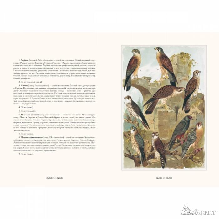 Иллюстрация 1 из 4 для Н. Холодковский. Птицы России - Н. Холодковский   Лабиринт - книги. Источник: Лабиринт