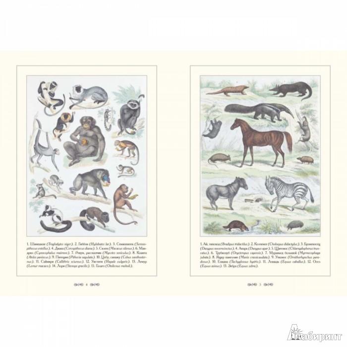 Иллюстрация 1 из 2 для Систематический атлас естественной истории - Траугот Бромме | Лабиринт - книги. Источник: Лабиринт