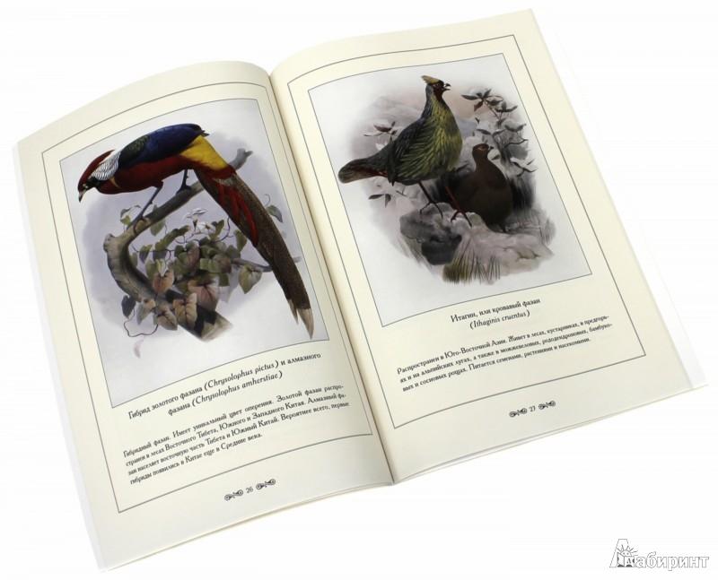 Иллюстрация 1 из 2 для Фазановые - С. Иванов | Лабиринт - книги. Источник: Лабиринт