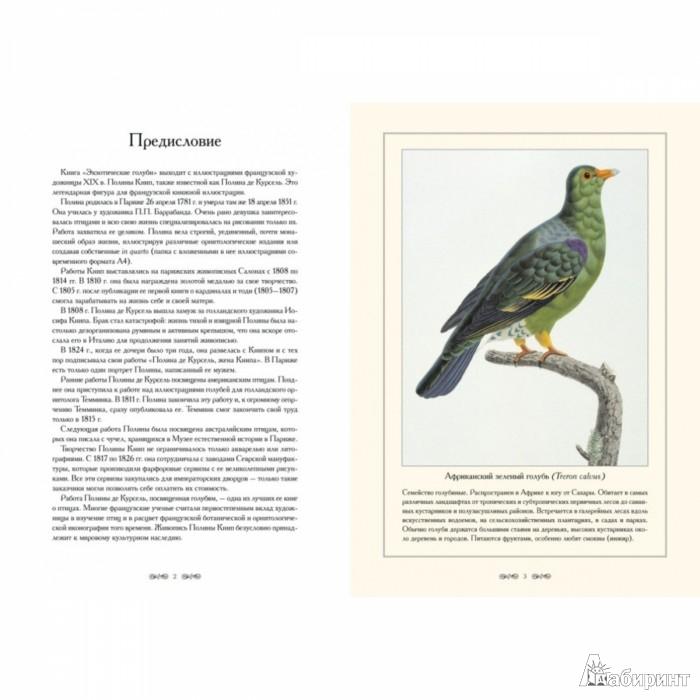 Иллюстрация 1 из 5 для Экзотические голуби - С. Иванов   Лабиринт - книги. Источник: Лабиринт