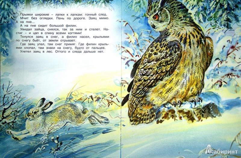 Иллюстрация 1 из 54 для Кузя двухвостый - Виталий Бианки | Лабиринт - книги. Источник: Лабиринт