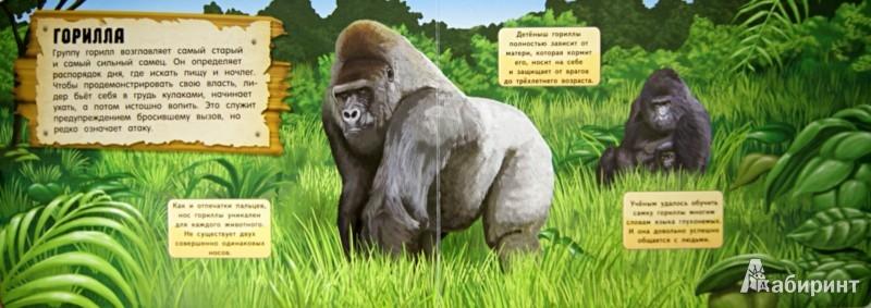 Иллюстрация 1 из 4 для Энциклопедия. Кто скрывается в джунглях? | Лабиринт - книги. Источник: Лабиринт