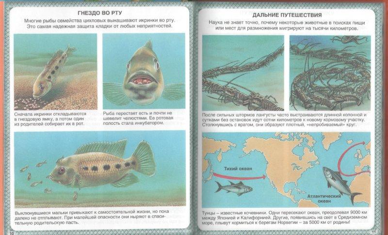 Иллюстрация 1 из 24 для Животные-рекордсмены - Эмили Бомон | Лабиринт - книги. Источник: Лабиринт