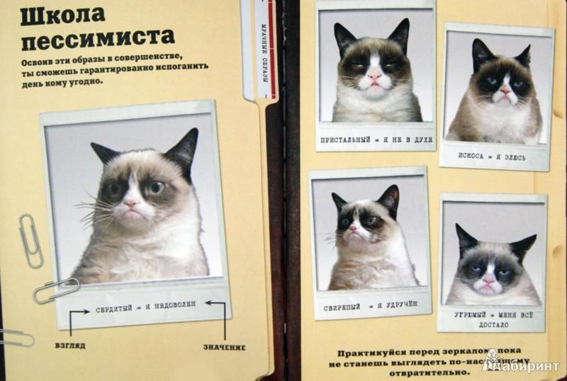 Иллюстрация 1 из 21 для Grumpy Cat. Сердитая книга от самой сердитой кошки в мире | Лабиринт - книги. Источник: Лабиринт