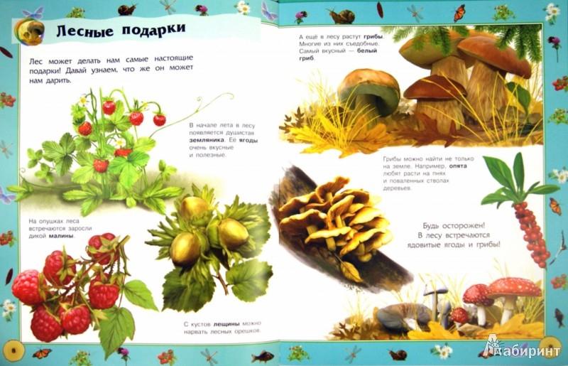 Иллюстрация 1 из 27 для Природа | Лабиринт - книги. Источник: Лабиринт