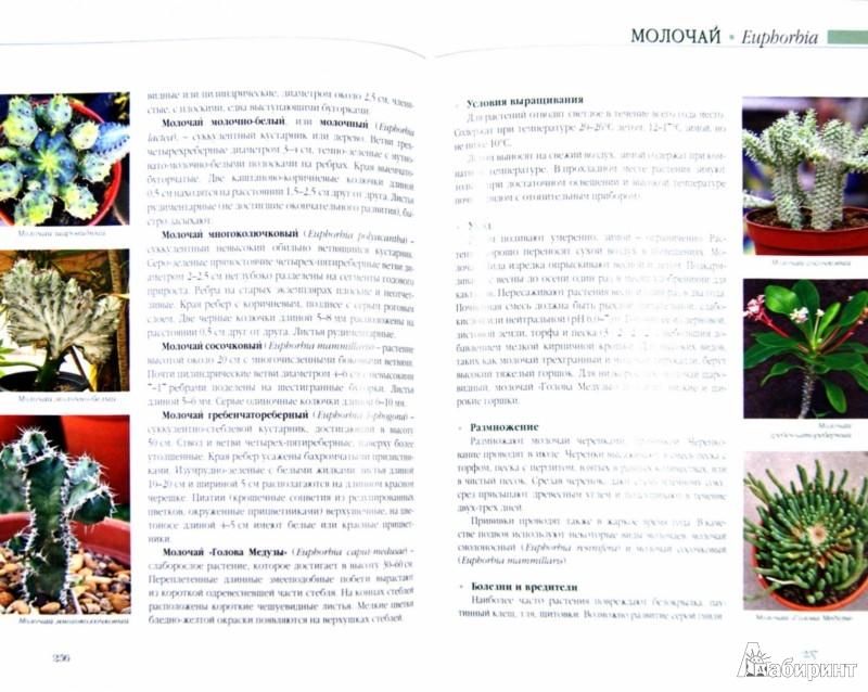 Иллюстрация 1 из 13 для Комнатные растения - Князева, Князева | Лабиринт - книги. Источник: Лабиринт