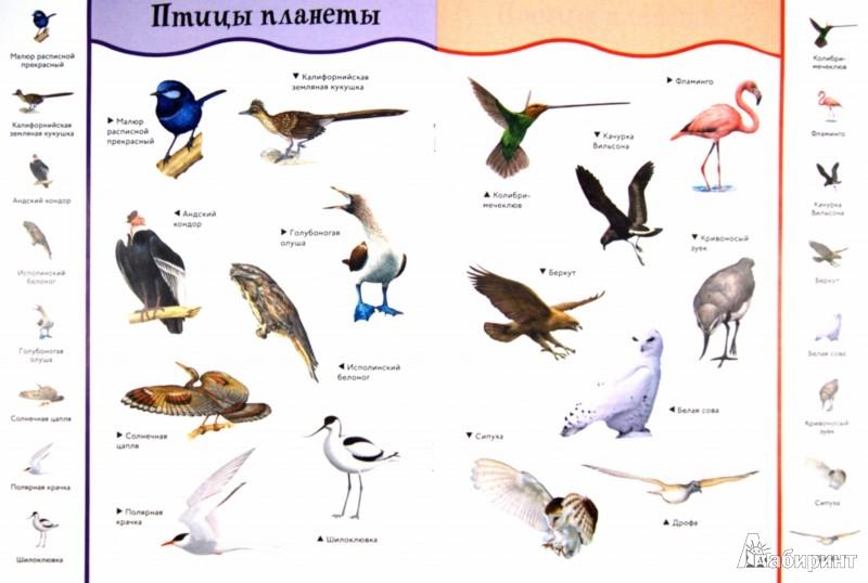 Иллюстрация 1 из 15 для Птицы. С забавными наклейками | Лабиринт - книги. Источник: Лабиринт