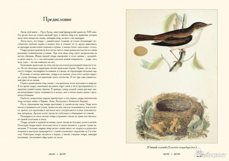 Иллюстрация 1 из 5 для Птицы и их гнезда - Рауль Булар | Лабиринт - книги. Источник: Лабиринт