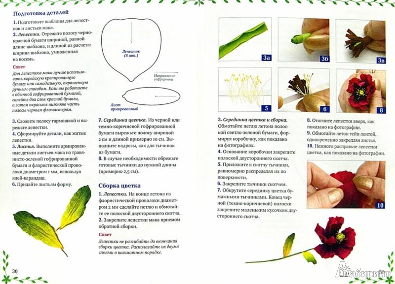 Иллюстрация 1 из 14 для Цветы из гофрированной бумаги: мастер-классы для начинающих - Анна Зайцева | Лабиринт - книги. Источник: Лабиринт