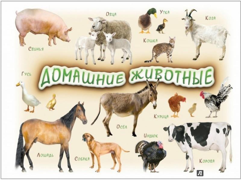 Иллюстрация 1 из 2 для Домашние животные 1-4 года   Лабиринт - книги. Источник: Лабиринт