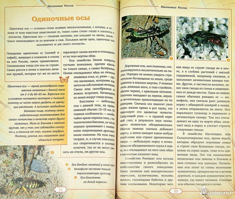 Иллюстрация 1 из 32 для Насекомые России. Жуки, бабочки и другие - В. Горбатовский | Лабиринт - книги. Источник: Лабиринт