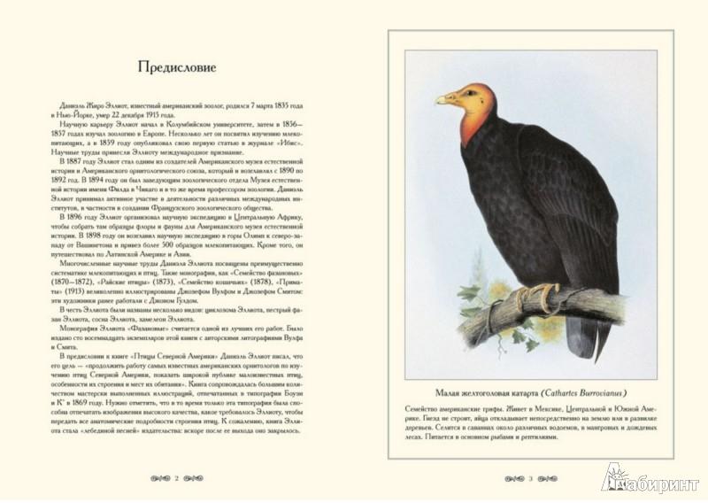 Иллюстрация 1 из 5 для Птицы Северной Америки. Д.-Ж. Эллиот - С. Иванов | Лабиринт - книги. Источник: Лабиринт