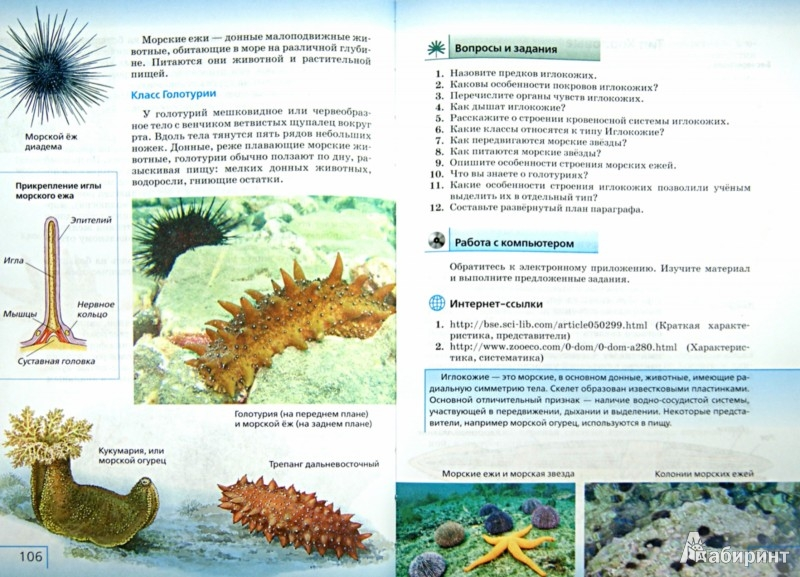 Иллюстрация 1 из 6 для Биология. Многообразие живых организмов. Животные. 8 класс. Учебник. Вертикаль. ФГОС - Захаров, Сонин   Лабиринт - книги. Источник: Лабиринт