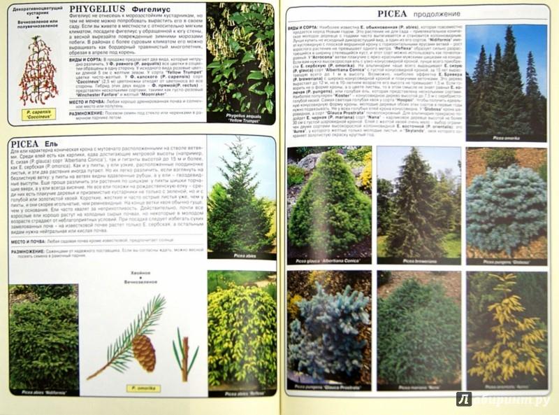 Иллюстрация 1 из 25 для Все о хвойных и вечнозеленых растениях - Дэвид Хессайон | Лабиринт - книги. Источник: Лабиринт