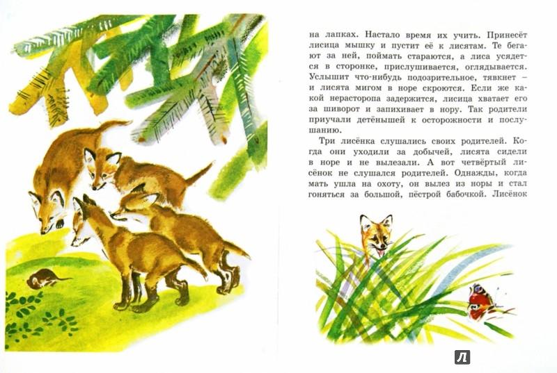 Иллюстрация 1 из 34 для Как лиса в лесу живёт - Вера Чаплина | Лабиринт - книги. Источник: Лабиринт