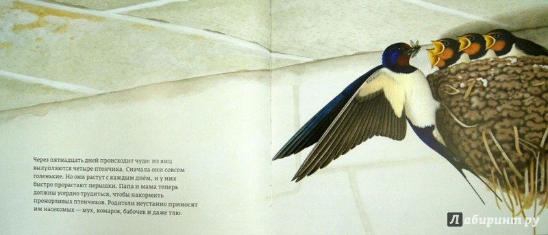 Иллюстрация 1 из 13 для Год с ласточками - Томас Мюллер | Лабиринт - книги. Источник: Лабиринт