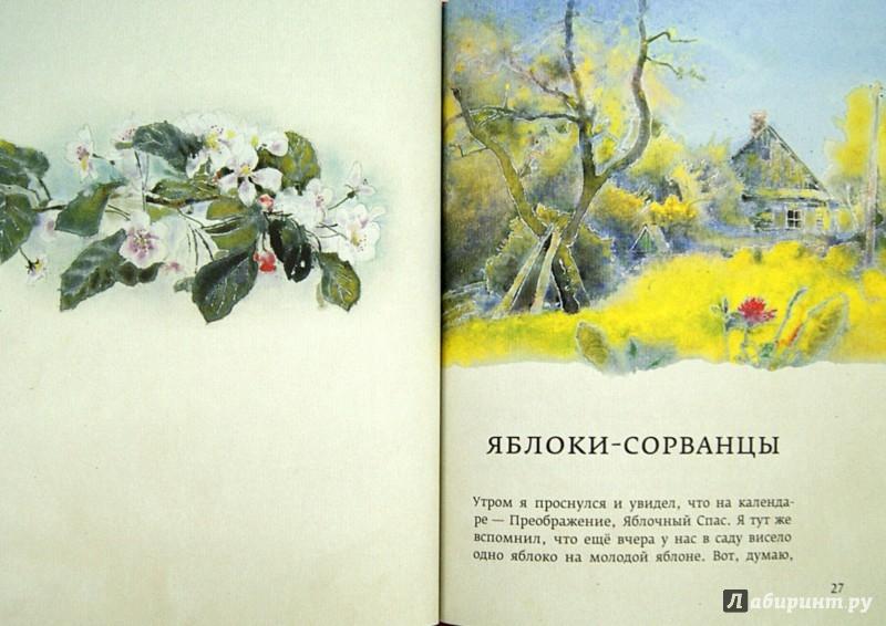 Иллюстрация 1 из 37 для Огонек в золотой шапочке - Дмитрий Шеваров   Лабиринт - книги. Источник: Лабиринт