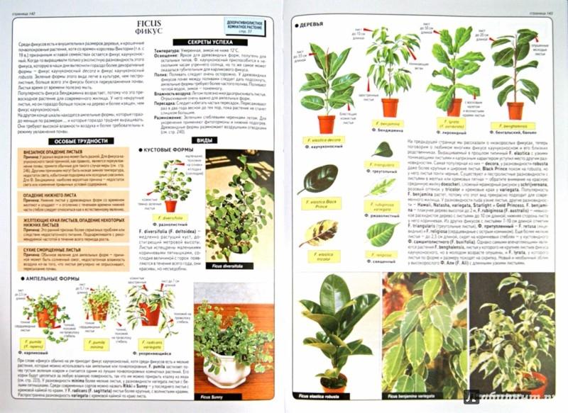 Иллюстрация 1 из 31 для Все о комнатных растениях - Дэвид Хессайон | Лабиринт - книги. Источник: Лабиринт
