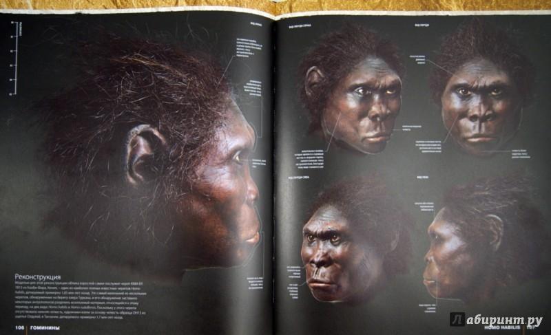 Иллюстрация 1 из 36 для Происхождение человека. Эволюция - Элис Робертс   Лабиринт - книги. Источник: Лабиринт