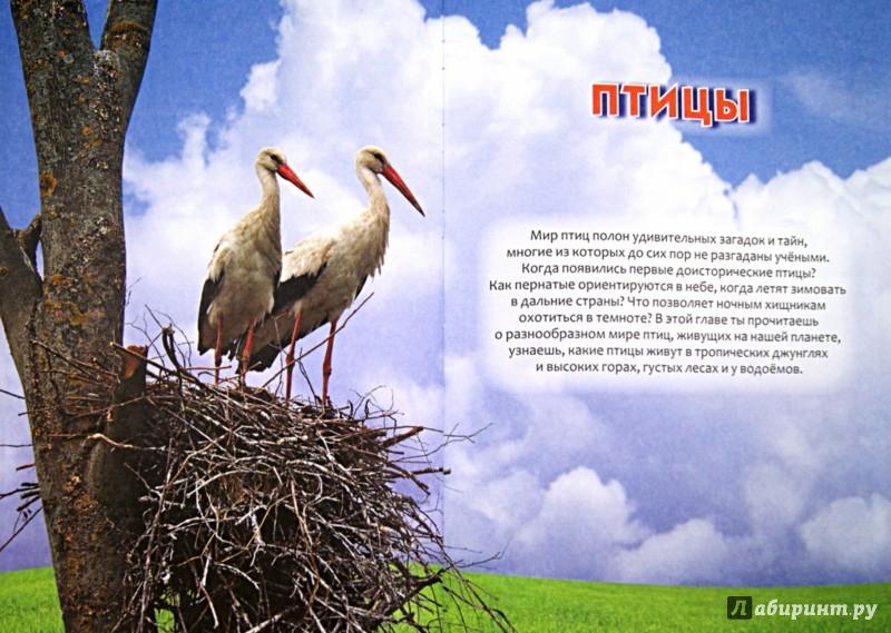 Иллюстрация 1 из 50 для Детская энциклопедия для умных и любознательных | Лабиринт - книги. Источник: Лабиринт