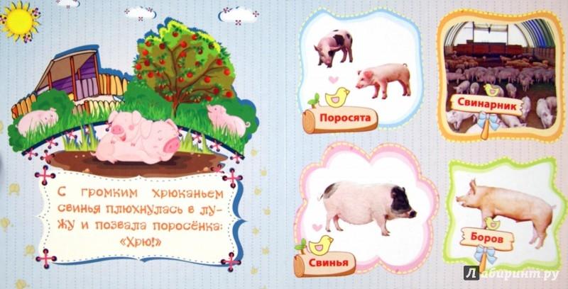 Иллюстрация 1 из 15 для Домашние животные и их детеныши - Вера Мельник   Лабиринт - книги. Источник: Лабиринт