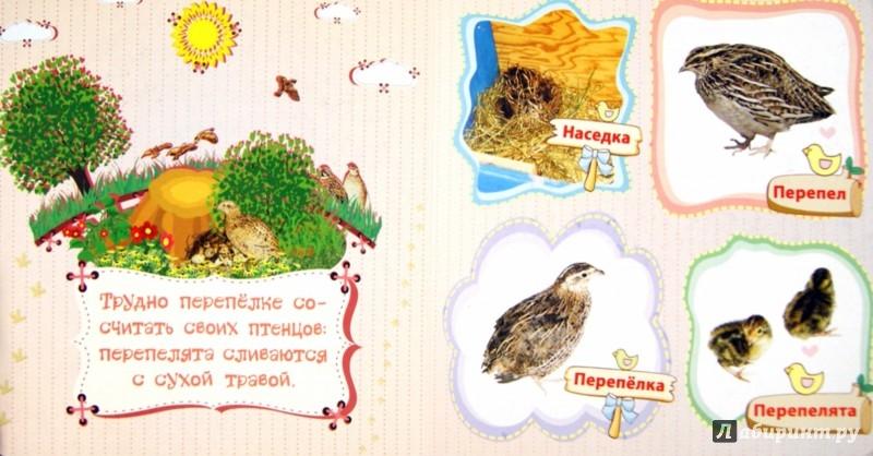 Иллюстрация 1 из 11 для Домашние птицы и их птенцы - Вера Мельник | Лабиринт - книги. Источник: Лабиринт