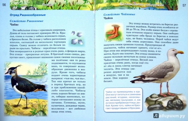 Иллюстрация 1 из 50 для Птицы   Лабиринт - книги. Источник: Лабиринт