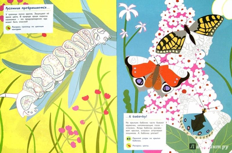Иллюстрация 1 из 36 для Насекомые - Оливия Косно | Лабиринт - книги. Источник: Лабиринт