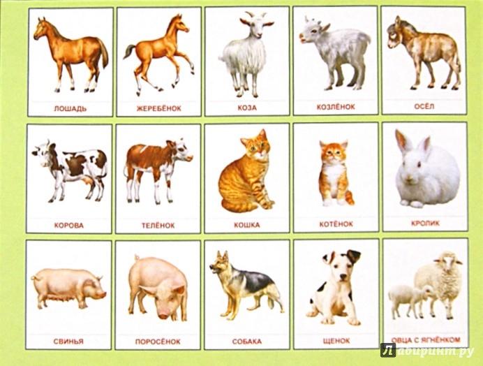 Домашние и дикие животные картинки для детей