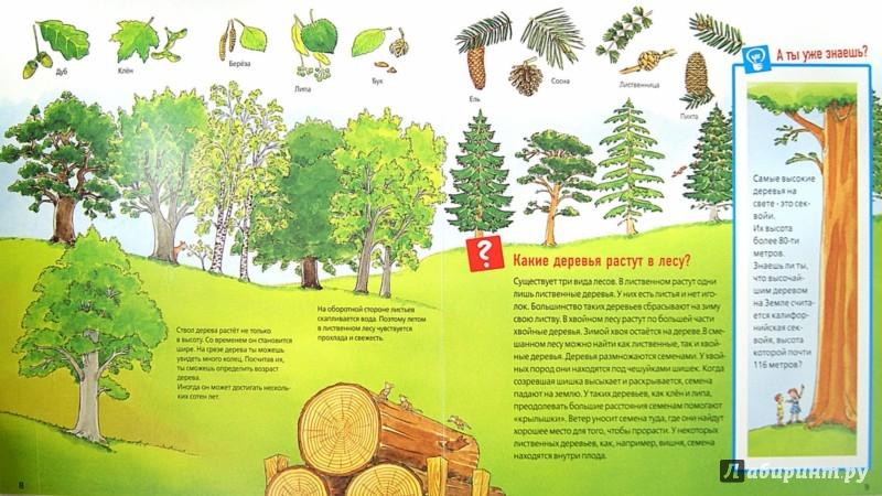 Иллюстрация 1 из 18 для Животные в лесу - Штаубер, Германн | Лабиринт - книги. Источник: Лабиринт