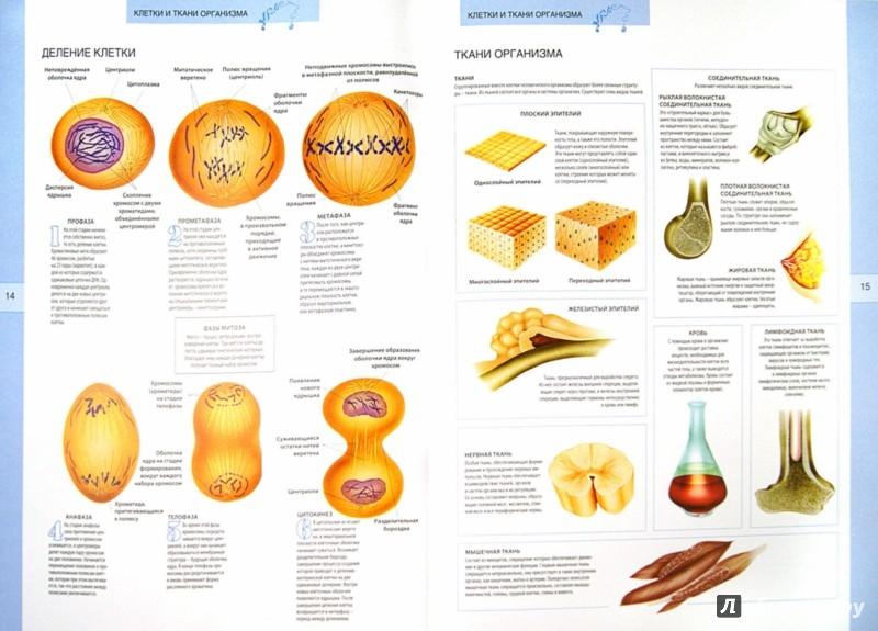 Иллюстрация 1 из 9 для Анатомический атлас. Основы строения и физиологии человека | Лабиринт - книги. Источник: Лабиринт
