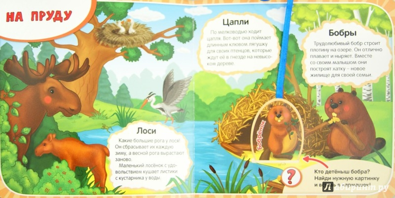 Иллюстрация 1 из 9 для Кто в лесу живет? - Елена Мирная | Лабиринт - книги. Источник: Лабиринт