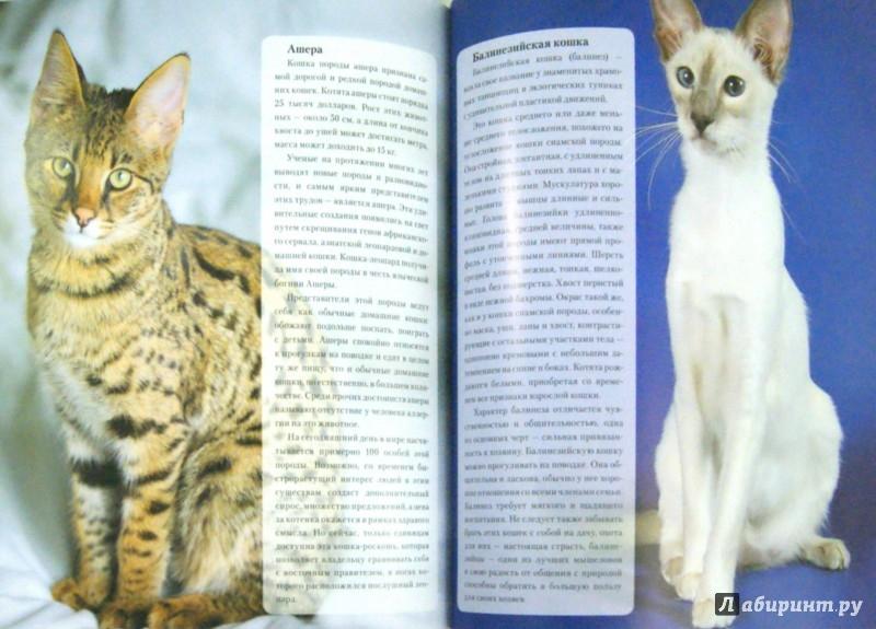 Иллюстрация 1 из 11 для Наши любимые питомцы - кошки - Екатерина Шейкина | Лабиринт - книги. Источник: Лабиринт