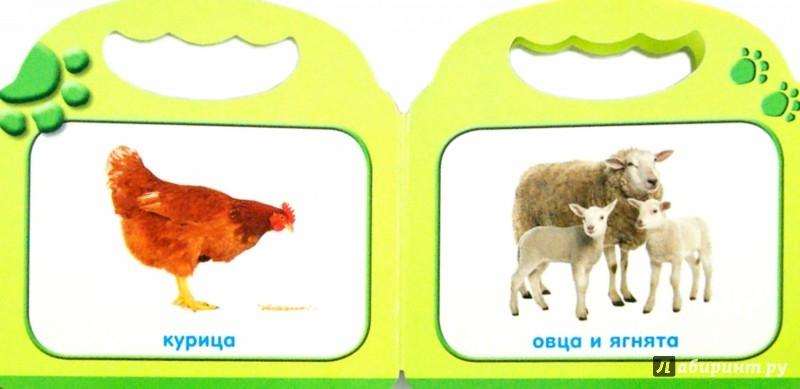 знакомства малыша с животными