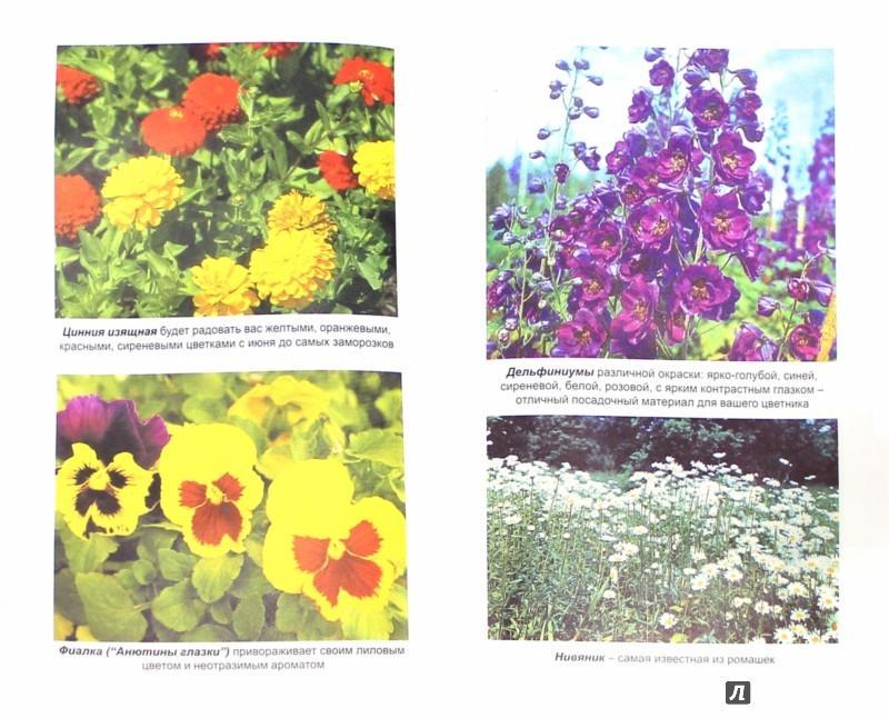 Иллюстрация 1 из 26 для Благоухающие цветы в вашем саду - Владимир Железнев | Лабиринт - книги. Источник: Лабиринт