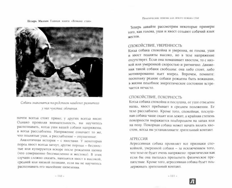 """Иллюстрация 1 из 9 для Главная книга """"Вожака стаи"""" - Цезарь Миллан   Лабиринт - книги. Источник: Лабиринт"""