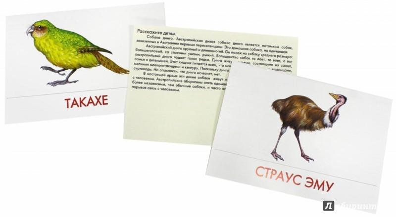 Иллюстрация 1 из 17 для Дидактические карточки. Животные Австралии | Лабиринт - книги. Источник: Лабиринт