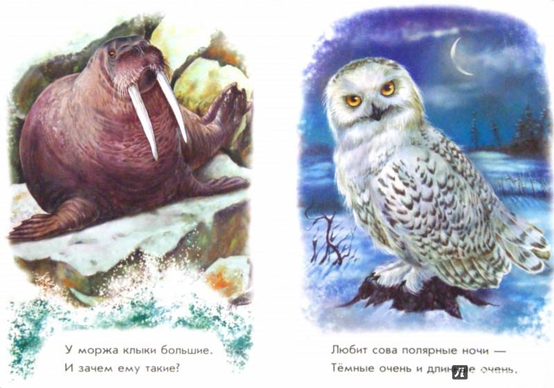 Иллюстрация 1 из 10 для Любимый зоопарк - Олеся Квитка   Лабиринт - книги. Источник: Лабиринт