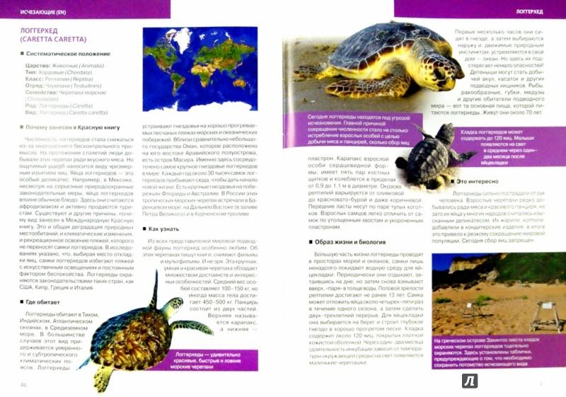 Иллюстрация 1 из 19 для Красная книга. Подводный мир планеты - Оксана Скалдина   Лабиринт - книги. Источник: Лабиринт
