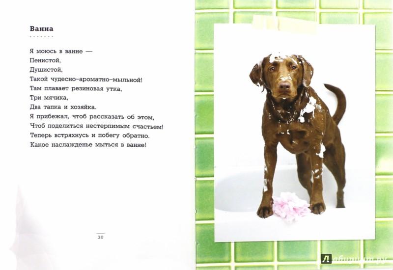 Иллюстрация 1 из 15 для Дело о выпотрошенном диване. Шедевры собачьей поэзии - Франческо Маркьюлиано   Лабиринт - книги. Источник: Лабиринт