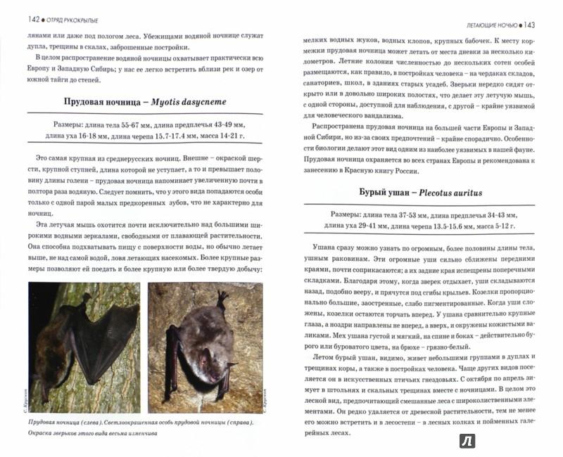 Иллюстрация 1 из 24 для Атлас-определитель млекопитающих. Звери средней полосы России - Сергей Крускоп | Лабиринт - книги. Источник: Лабиринт