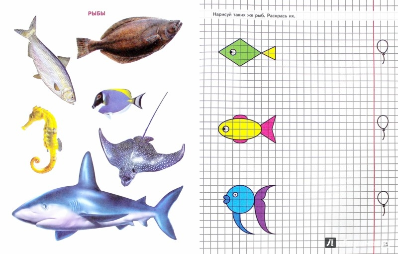 Иллюстрация 1 из 22 для Геометрия вокруг нас. Рисование по клеточкам 5-7 лет. ФГОС ДО - Елена Колесникова | Лабиринт - книги. Источник: Лабиринт
