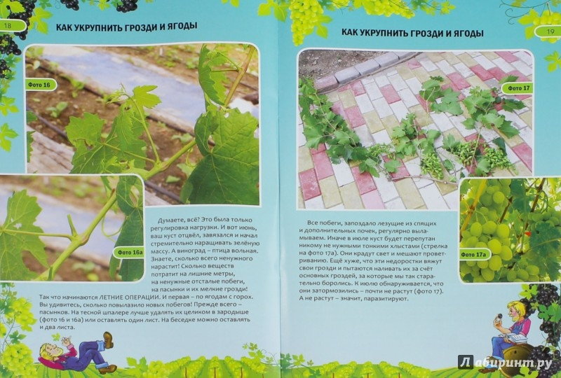 Грибы выращивание для себя и на продажу 70