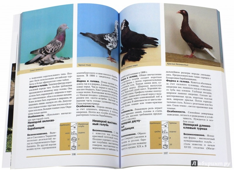 Иллюстрация 1 из 6 для Голуби. 300 пород для выставок и разведения - Хорст Шмидт | Лабиринт - книги. Источник: Лабиринт
