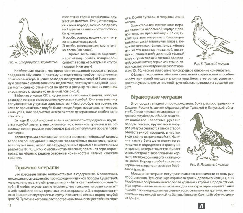Иллюстрация 1 из 6 для Разведение домашних голубей - Каминская, Вальтер   Лабиринт - книги. Источник: Лабиринт