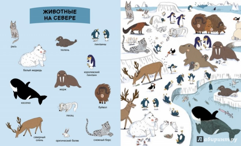 Иллюстрация 1 из 15 для Моя первая энциклопедия. Животные | Лабиринт - книги. Источник: Лабиринт