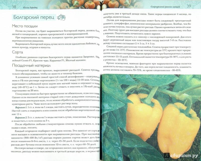 Иллюстрация 1 из 13 для Ранние овощи. Секреты сверхурожая - Ольга Городец | Лабиринт - книги. Источник: Лабиринт